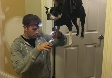 Most extra dad ever suspends dog from makeshift harness to clip his nails