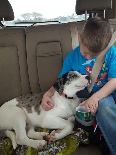 Puppy and boy in car