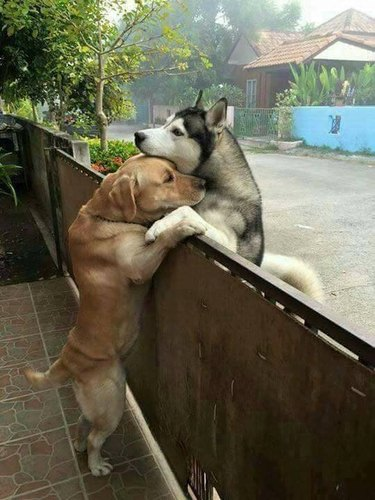 This Lonely Dog Escaped His Yard to Hug Another Dog