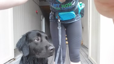 22 dogs that have no idea how dog leashes work