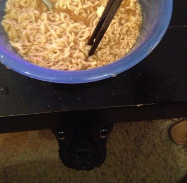 Dog underneath table looking up at bowl of noodles.