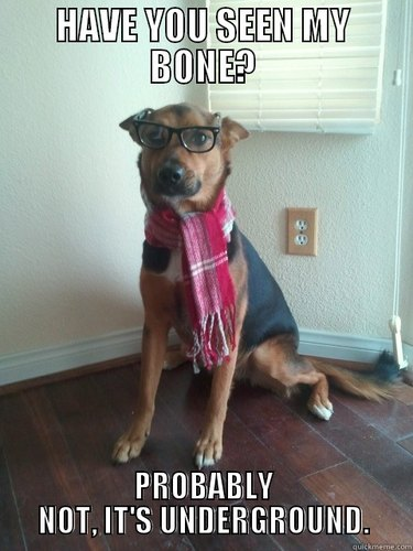 """Dog in glasses and scarf with text """"Have you seen my bone? Probably not, it's underground."""""""