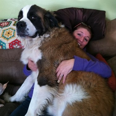 Big dog on woman's lap.