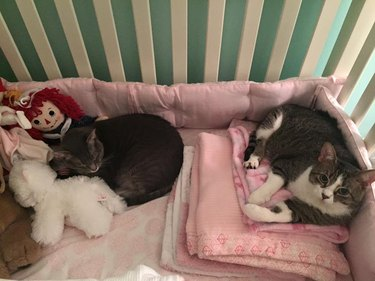 Cats in Crib
