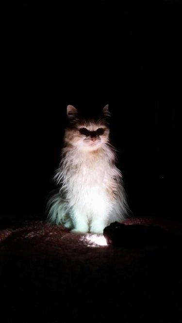 Cat sitting by flashlight in the dark