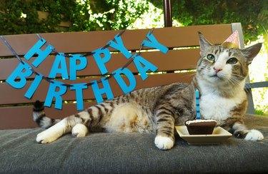 Pecan the cat celebrates his 12th birthday