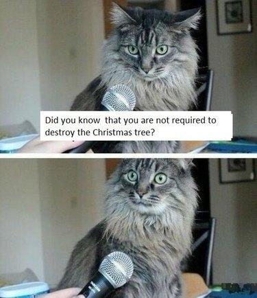Cat being interviewed