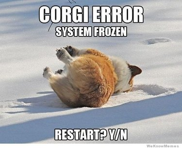 Corgi on its side in snow. Caption: Corgi Error, System Frozen, Restart? Y/N