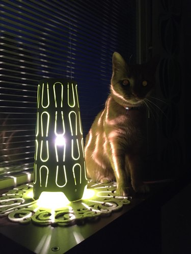 Cat sitting in dark by lamp