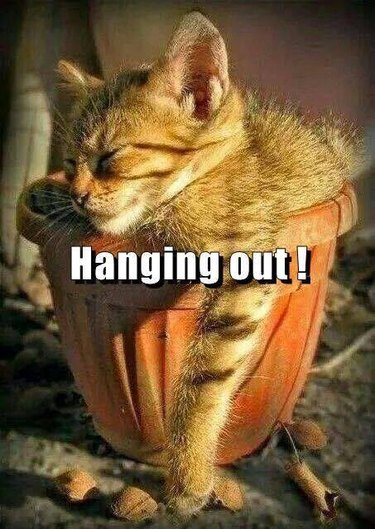 Hang Out Cat