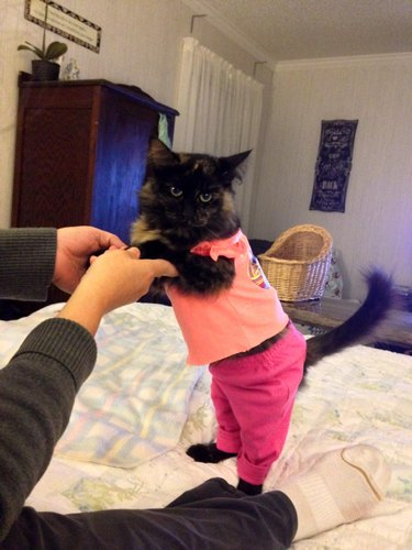 Confused cat in shirt and pants