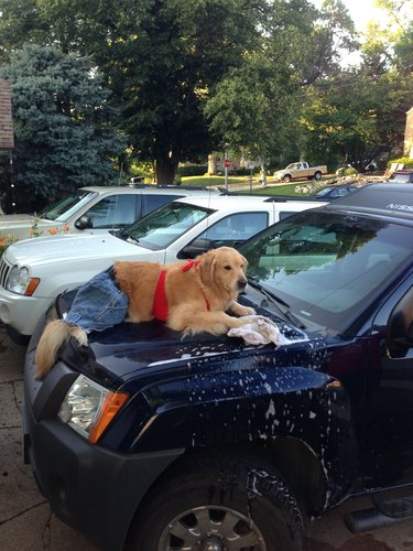 """Famous """"Redneck Retriever"""" Says Goodbye In Beautiful Tribute"""