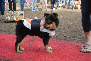 """Costumed Canines Make The Scene At """"Howl-O-Ween"""" Pet Parade"""