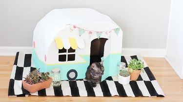 cat laying inside a cardboard kitty camper