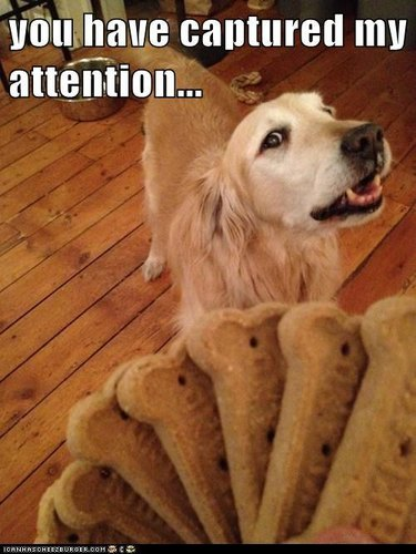 Dog looking at dog biscuits in photographer's hand. Caption: You have captured my attention...