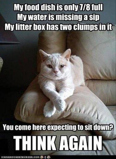 Judgmental cat on an armrest.