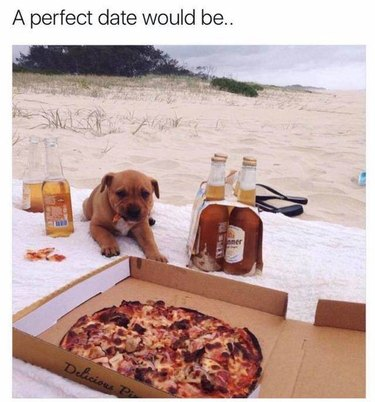 Puppy on beach with pizza and beer.