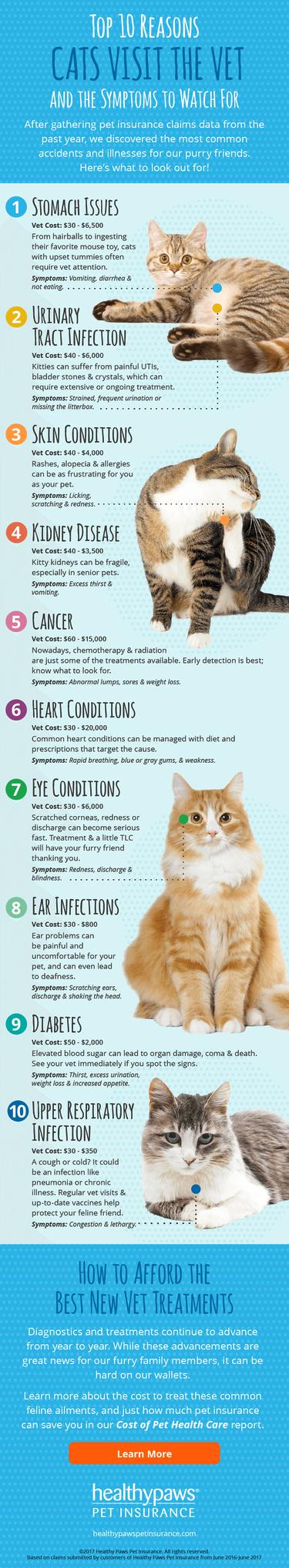 Top 10 Reasons Cats Visit The Vet