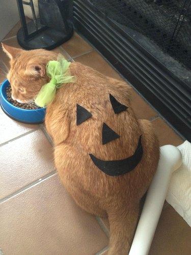 Cat dressed up like a pumpkin