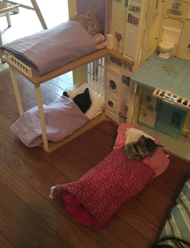 Kittens asleep in doll beds