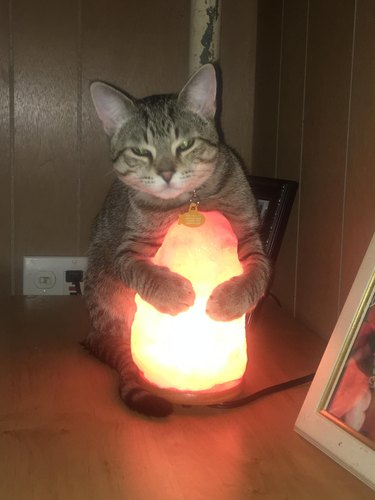 Cat hugging salt lamp