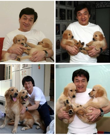 Photo set of Jackie Chan holding golden retriever puppies