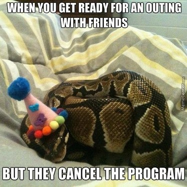 Snake in a party hat.