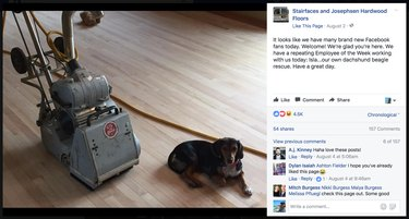 Dogs named Employee of the Week at New Jersey flooring company