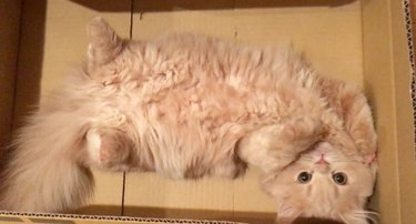 Bell in a box showing her tummy