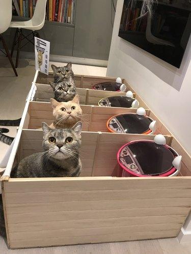 Cat Partition