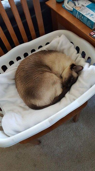 Cat in Laundry