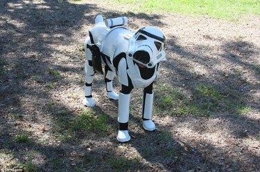 Star Wars stormtrooper doggo