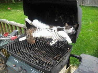 Cat asleep in BBQ