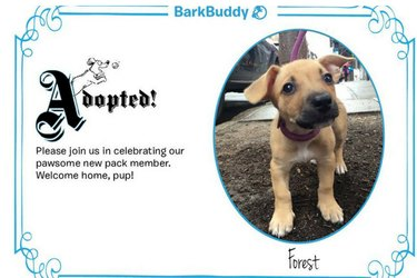 Bark Buddy
