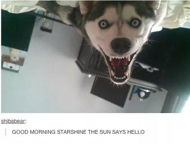 Dog upside down on bed, Caption: GOOD MORNING STARSHINE THE SUN SAYS HELLO