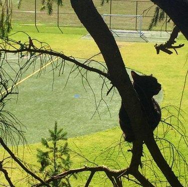 Cat stuck in a tree overlooking a field