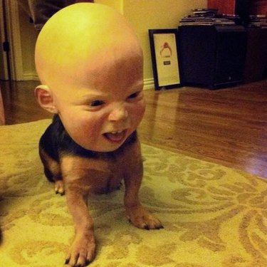 Dog with a baby mask