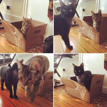 Kittens take turns sitting in a cardboard box.