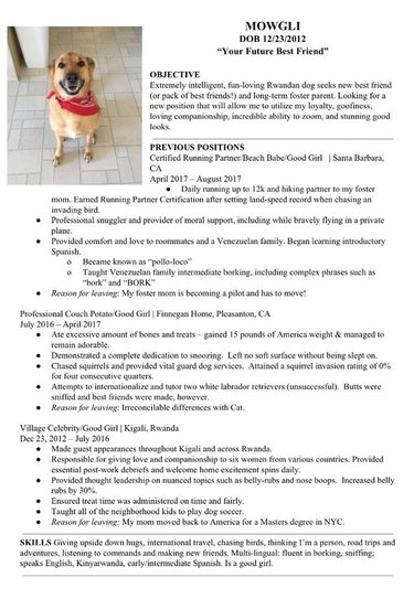 Humans write hilarious resume for foster dog in need of new home
