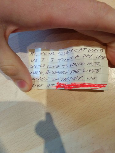 Owner Finds Note on Cat's Collar