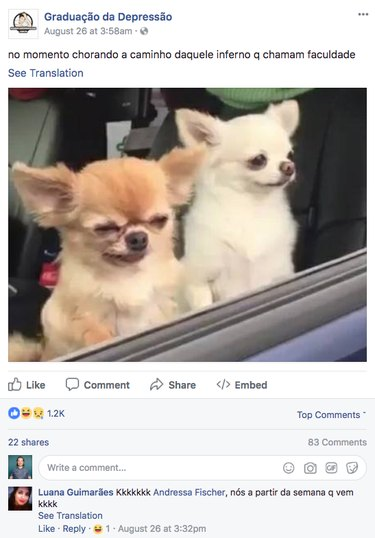 Chihuahua slumping over in car goes global
