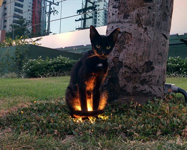 Cat with spooky lighting
