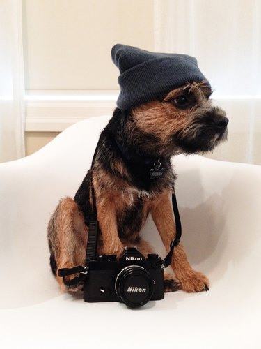 Dog with knit beanie and film camera.