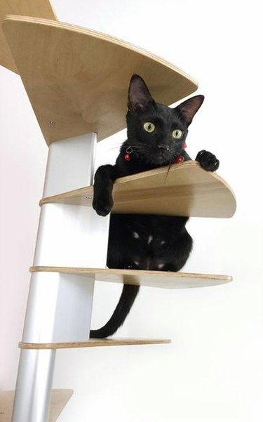 The Coolest Cat Furniture Ever