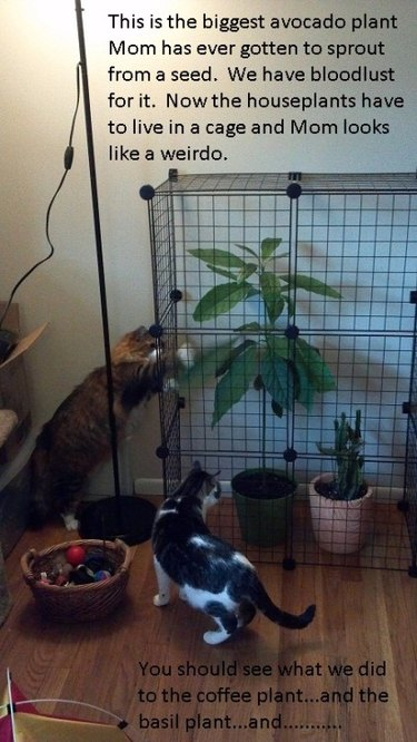 Cat trying to get to plants.