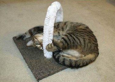 Cat self-petting station