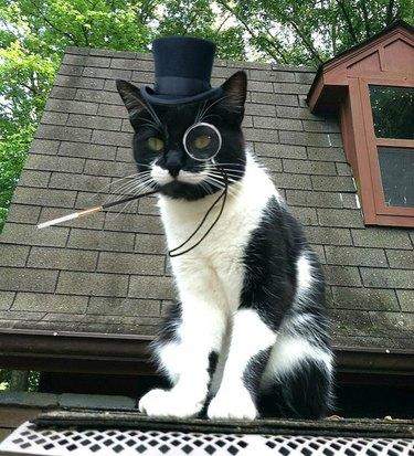 robber baron mustache cat
