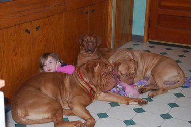 Little girl with three big dogs.