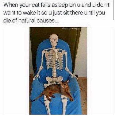 Cat sitting on skeleton's lap