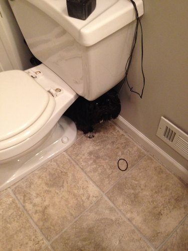 Black dog hiding behind toilet.